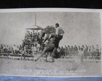 Antique Rodeo Postcard Chavis Wild Ride Doubleday