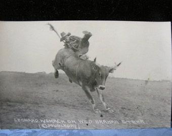 Rodeo Antique Postcard Leonard Womach Steer Doubleday