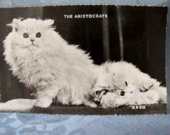 Vintage Postcard The Aristocrats Two Longhaired Kittens White England