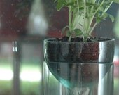 self watering planter made from recycled wine bottle. perfect for indoor fall greenery.