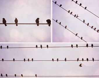 Birds on a wire purple series three 8x10 photos
