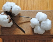 Natural Cotton Bolls - Raw Cotton - DIY Cotton - Bridal - Wedding - Home Decor - Gift