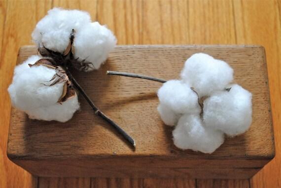 Natural Cotton Bolls - Raw Cotton - DIY Cotton - Bridal - Wedding - Home Decor - Gift