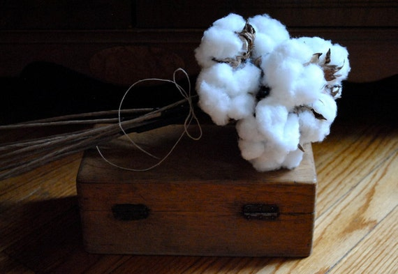 "Beautiful Single Cotton Boll - Wired Stem - 18"" - Natural Cotton - Raw Cotton - Natural Cotton Boll - DIY Cotton - Wedding"