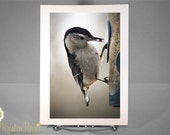 Greeting Card - White-breasted Nuthatch