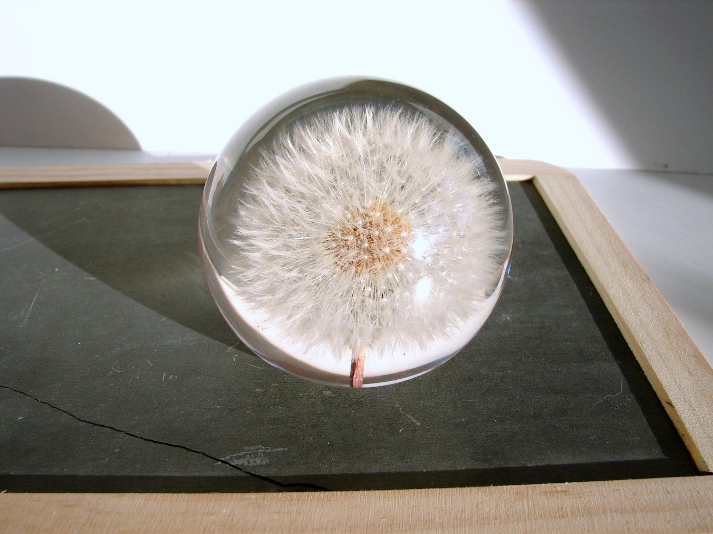 Vintage Dandelion Seed Head Paperweight Preserved Dandelion