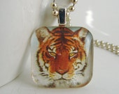 Eyes of the Tiger Pendant with Free Necklace