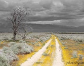 Yellow Road yellow flowers gray grey sky fine art photography