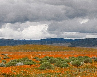Spring colors orange Poppies gray skies California spring time 5x14 panorama