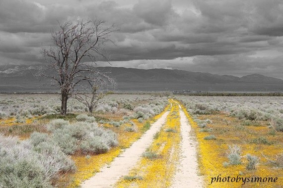 Yellow Road yellow flowers gray sky fine art photography