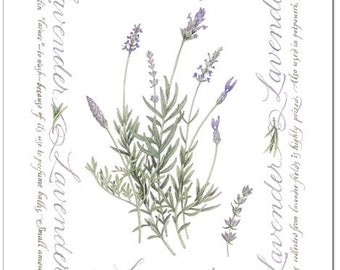 Lavender, Small Giclee Print