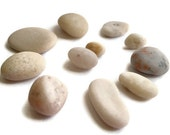 Natural Beach Stones - Baltic Sea/ Beach near city of Ventspils - White Shades