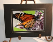 Small Double Black Matted Print - Monarch Butterfly on Bloom