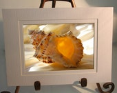 Small Double White Matted Print - Illuminated Conch