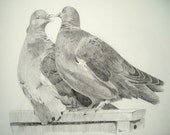 Pigeons Original Drawing Graphite Pencil on paper, 24 x 37 cm couple in love birds