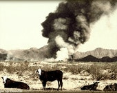 "Cows & Fire Arizona Desert Ranch Vintage Look 11x14 ""Life on the Open Range"" Fine Art"