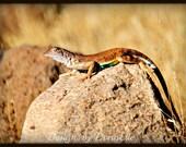 "Arizona Lizards Trio ""Prehistoric Desert Dwellers"" Arizona Set of 3 5x7 Fine Art Photos"