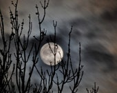 Moon Photo, cloudy night sky, moon photograph, trees, silver moon,  8 x 10 print No102- Hide & Seek - LoneCrowPhoto