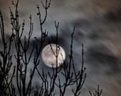 Moon Photo, cloudy night sky, moon photograph, trees, silver moon,  8 x 10 print No102- Hide & Seek