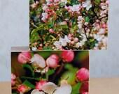 apple blossom, spring blossom, apple tree, pink flowers, spring photographs, 2 wooden box-frames, photo blocks