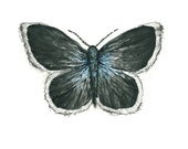 butterfly watercolor giclee print  // BLACK & BLUE  / 8 x 10 inches / art print / home decor