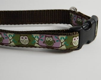 "Owl Dog Collar- Cute Hoot 3/4"" Wide"