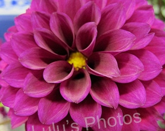 Flower Photography, Grape Dahlia Cards and Prints