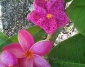 CROCHET PATTERN, Frangipani or Plumeria Flower