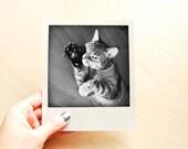 Kitty Paw Polaroid Print - Photography Art Print - Home Decor - Wall Art - Bookmark - Buy 3 Get 1 Free