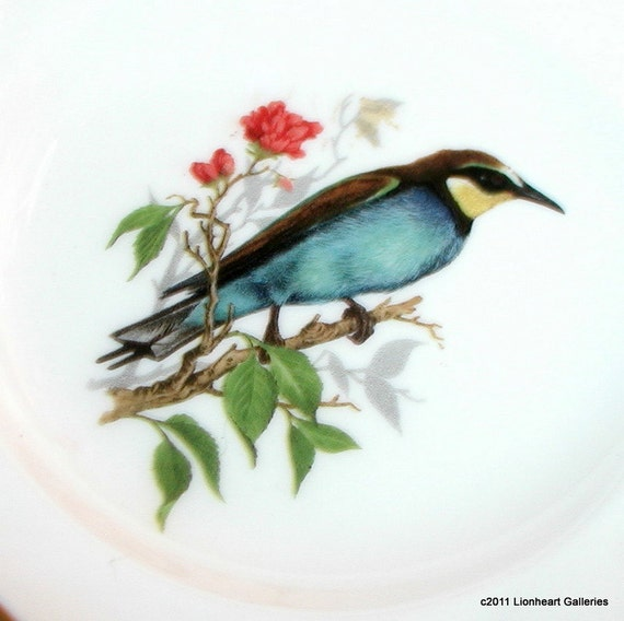 Vintage Duchess English Bone China Bird Plate