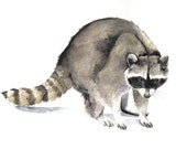 Raccoon Painting -  R046- Print of watercolor painting by Splodgepodge 5 by 7