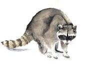 Raccoon Painting -  R046- Print of watercolor painting 5 by 7 raccoon watercolour print - animal painting -