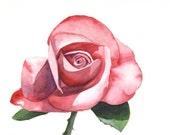 Rose watercolor painting ORIGINAL watercolor