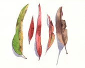 Eucalyptus Leaves Painting -E026-  print of watercolor painting 5 by 7