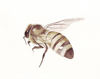 Bee Painting  Insect - B004 urban country rustic natural art - Print of watercolor painting - 5 by 7 print