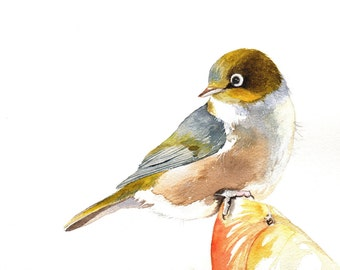 Bird Painting Silvereye -S061- Bird art nature wildlife art - Print of watercolor painting 5 by 7 wall art print - bird art - art print