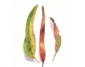 Eucalyptus Leaves Painting -  natural nature decor - Print of watercolor painting - 5 by 7 print
