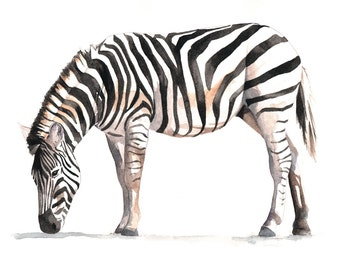 Zebra watercolor Painting - Z035-  Print of watercolor painting 5 by 7 print