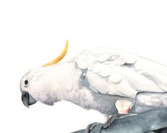 Cockatoo Painting Archival Print of watercolor painting, bird art, wall art, home decor, Australian bird art