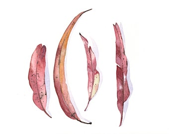 Eucalyptus Leaves Painting -E022- print of watercolor painting 5 by 7