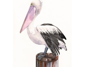 Pelican Painting P072 wildlife nature bird art ocean beach print of watercolor painting 5 by 7 print wall art print - bird art - art print