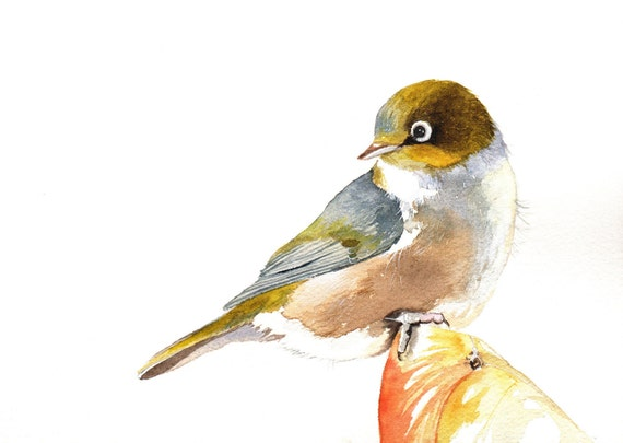 Bird Painting Silvereye -S061- Bird art nature wildlife art - Print of watercolor painting 5 by 7 wall art print - bird art - art print
