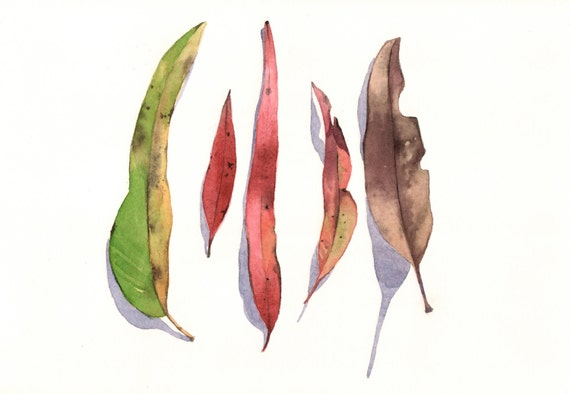 Eucalyptus Leaves Painting -E026- print of watercolor painting A4 size print