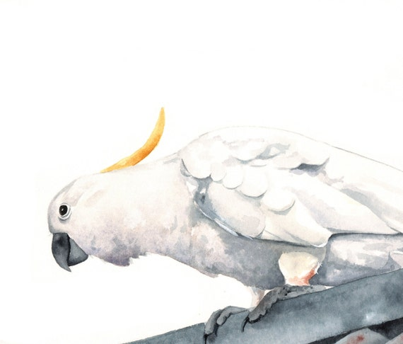 Cockatoo Painting Archival Print of watercolor painting, bird art, wall art, home decor, Australian bird art