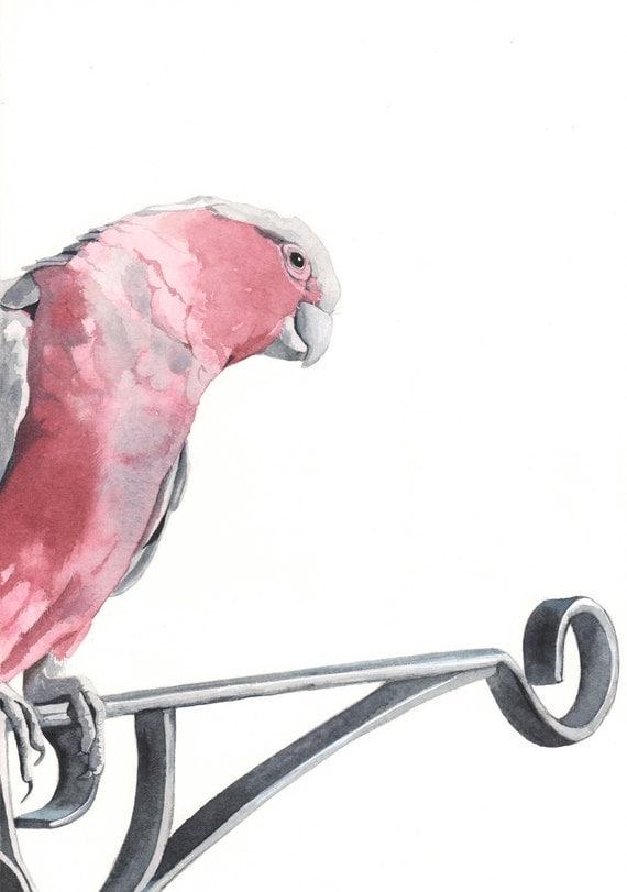 Galah painting -  bird print of watercolor painting A4 print, australian bird art, bird art, wall art, home decor