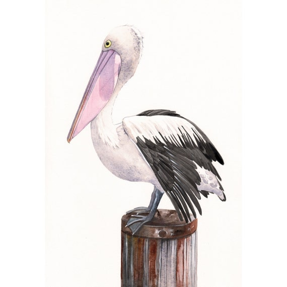 Pelican Painting P072 wildlife nature bird art ocean beach print of watercolor painting 5 by 7 print wall art print - bird art - art print