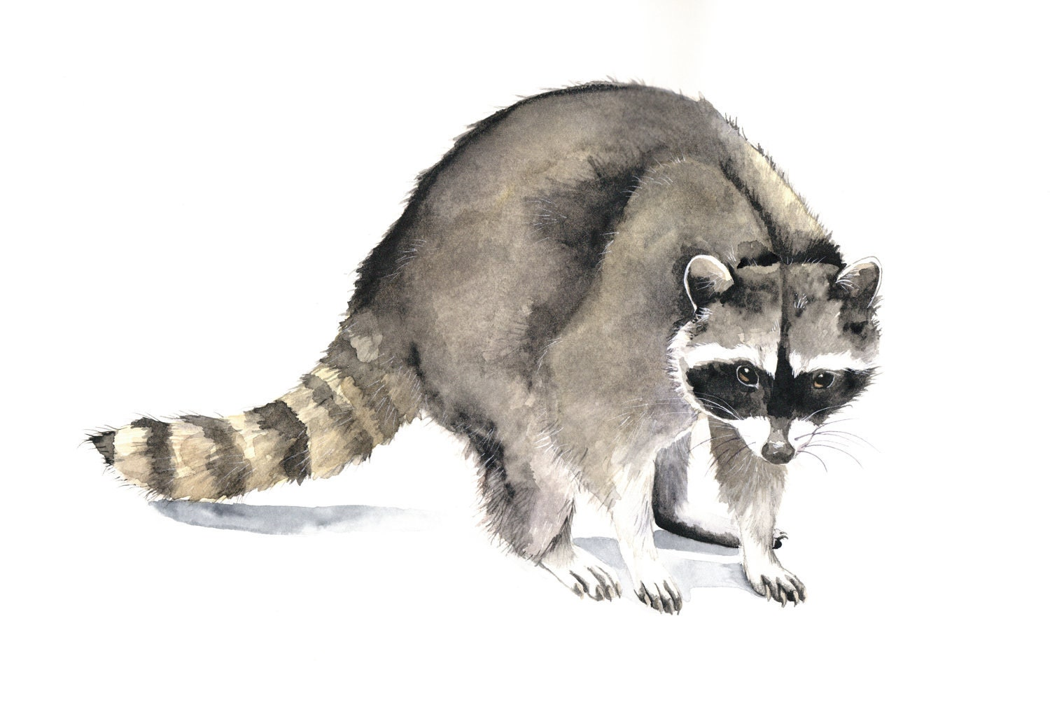 Kitchen & Dining Raccoon Painting