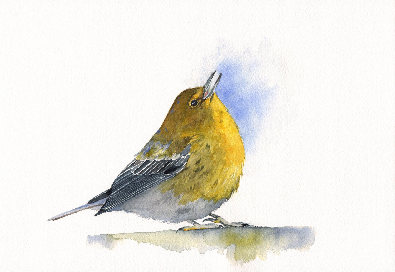 Pine Warbler Bird Painting P052 Print of by LouiseDeMasi ...