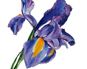 Purple Iris Watercolor Art Print - Giclee