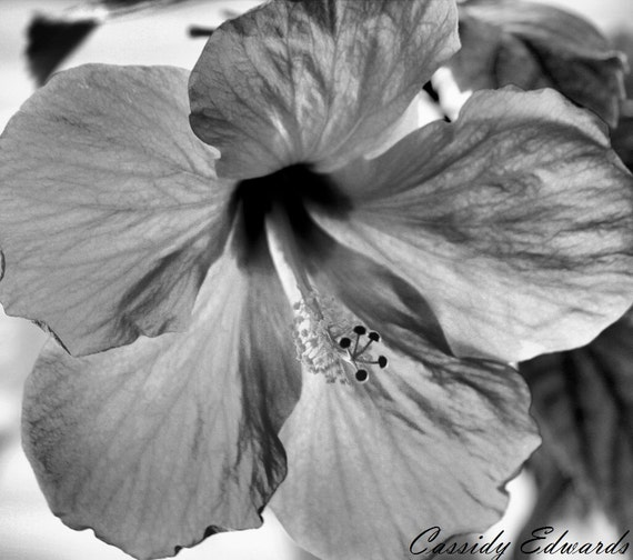 Black and White Flower Photography, Hibiscus Art Print